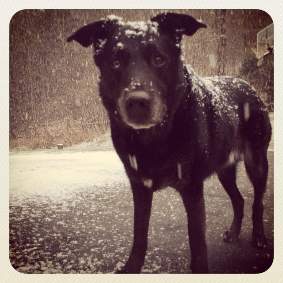 Cold Weather & Your Dog: Winter Safety Tips!