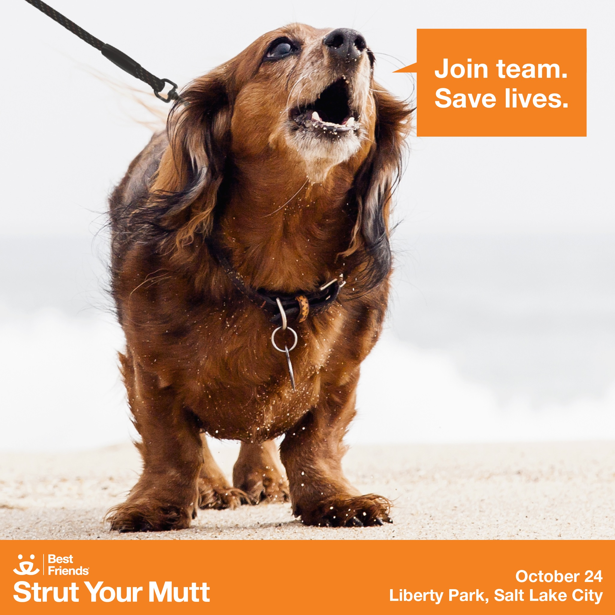Strut Your Mutt 2015 - Join team. Save lives.