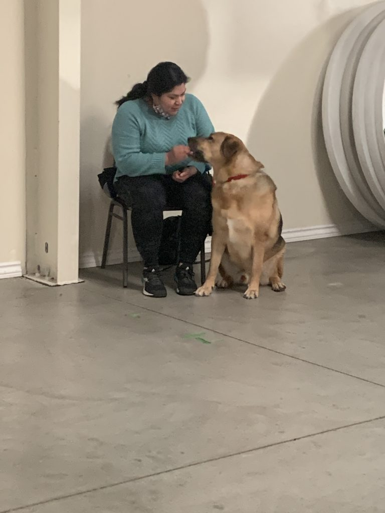 veteran with her dog